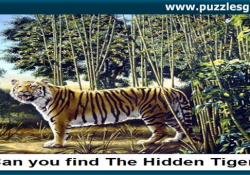 an-you-find-a-hidden-tiger